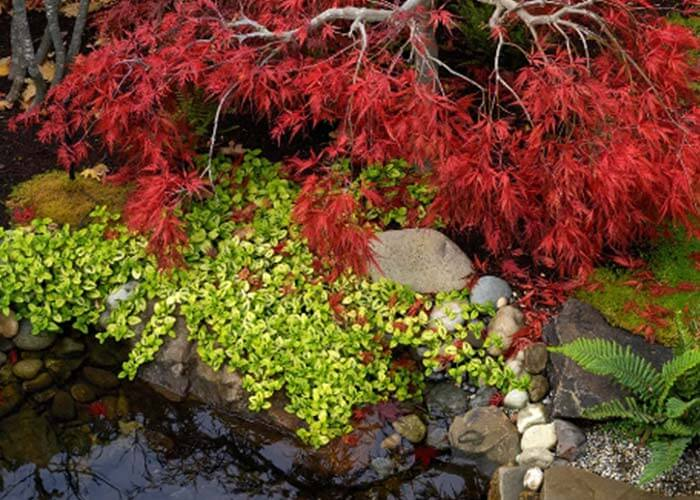 landscape design 24 - طراحی لنداسکیپ برای باغ و فضاهای سبز مسکونی
